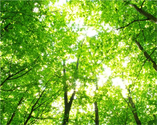 オゾン 森林